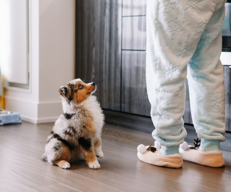 Small dog looking up at its owner